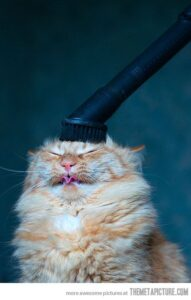 Should I use a shampoo brush scalp massager?